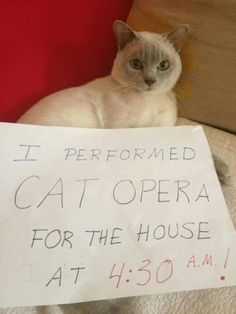 Lol! Cat humor. Took me a second to get it! Cat performed cat opera at 4:30 am. Yep, been there!
