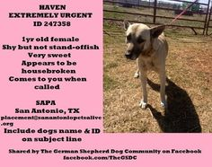 SAN ANTONIO, TX....  PLEASE like, comment, tag, or SHARE this girl to safety!!! EXTREMELY URGENT!!!   Needs adoption or rescue TODAY! Haven is a 1yr old female. She is a very sweet girl who is shy at first, but warms up quickly when she knows she is safe. She may be a bit shy, but she is not standoffish and comes to you when called. She appears to be housebroken. Please read adoption instructions in the text below. Let's make sure she gets out of the shelter in time!