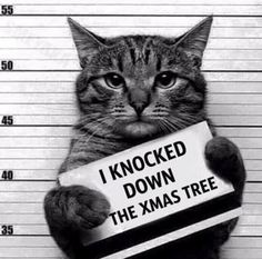 Criminal cat.