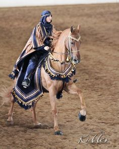 Equine Ship of the Desert. Photo by: Kevin Kidder