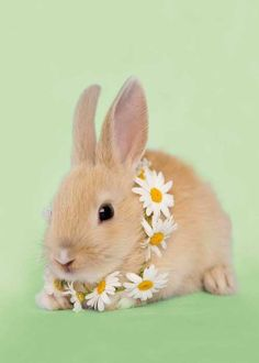 Even bunnies wear 'em. https://www.etsy.com/listing/128759616/daisy-flower-crown-spring-floral