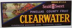 3.25X8.75 CLEARWATER Vintage  Clearwater Florida Citrus Crate Label