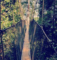 Canopy walk way #capecoast #ghana