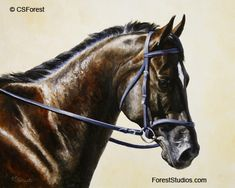 Bay dressage horse portrait - - Original oil painting by wildlife artist Crista Forest. Fine Art Prints and Notecards available at Fine Art America. http://fineartamerica.com/profiles/crista-forest.html