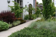 Mosaic Gardens designs and installs exceptional landscapes. Our gardens have been featured in Sunset, Fine Gardening, Garden Design and other publications. Landscape Design, Garden Design, Fine Gardening, Mosaic Garden, Dream Garden, Garden Plants, Outdoor Living, Sidewalk, Environment