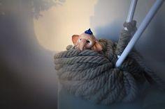 #toys #игрушка #животные #слон #слоник #слонята #пряжа #elephantlove #elephant #animal #animals #валяние #валяниешерсти #валяние_шерсти #фильцевание #рукоделие #ручнаяработа #handmade #feltcraft #needlework #needlefelting #home #creative #decor #design #надеждамичеева