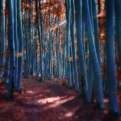 -Spirited away- by Janek-Sedlar on DeviantArt