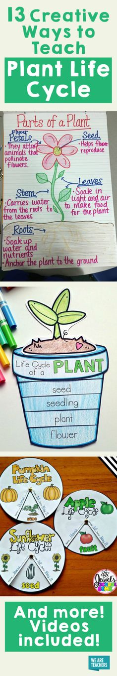 13 Creative Ways to Teach Plant Life Cycle - WeAreTeachers