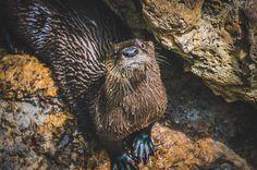 20 Amazing Photos of Wildlife across North America