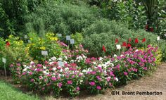 Drought Tolerant Shrubs for Texas | how texas agrilife research trials plants under grueling texas ...