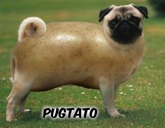 Pug Puns Plus • Pugtato!!!