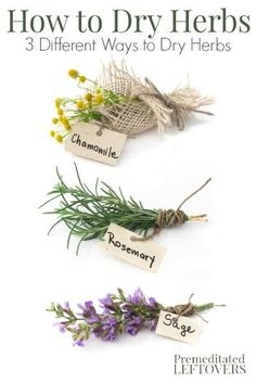 How to dry herbs and flowers using 3 different methods - hanging herbs to dry, how to microwave herbs to dry them, and how to dry flowers in books. Hanging Herbs, Decoration Plante, Growing Herbs, Medicinal Herbs, Herbal Medicine, Dried Flowers, How To Dry Flowers, Fresh Herbs, Gardening Tips