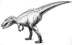 The Dino Directory - Giganotosaurus - Natural History Museum