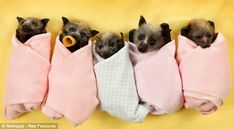 bat nursery - Google Search
