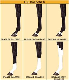 Psychology infographic and charts Psychology: COLORS AND BRANDS Infographic Description Psychology i Majestic Horse, Beautiful Horses, Horse Markings, Horse Care Tips, Horse Anatomy, Horse Facts, Horse Accessories, Horse Love, Horse Riding