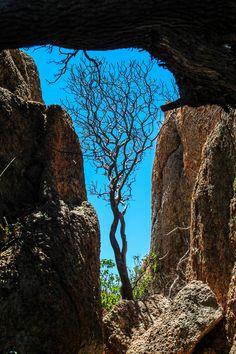Tree stones