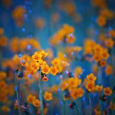 """""""Flower dreams"""" Canvas Prints by Tomas Kaspar"""
