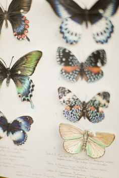 illustrated paper butterfly chart by WendyFrancisco.com // photo by BrumleyandWells.com