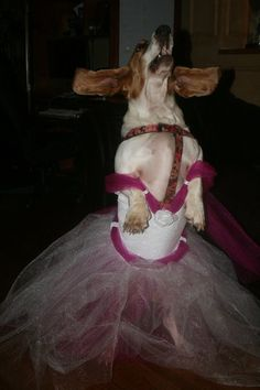Basset Hounds <3~ So need to do this to Sweet Pea!!!