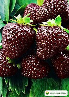 Fruit Plants, Fruit Garden, Edible Garden, Fruit Trees, Exotic Fruit, Tropical Fruits, Beautiful Fruits, Beautiful Flowers, Photo Fruit