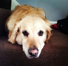 Bradley's dog - Jesse