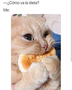 Y como va la dieta