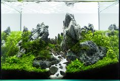 Peaks by Roman Holba from Czech republic Aquarium size: 30 x 20 x 20 cm