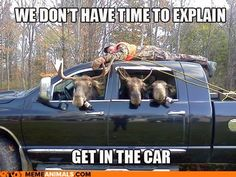 Funny animal pictures of muses in car - funny animal pictures.