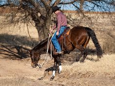 Downunder Horsemanship | Training Tip: Help your horse stay stumble-free