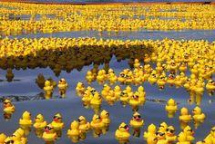 28 000 canards en plastique se sont perdus en mer avec leur container allant du Japon aux Etats-Unis LOL