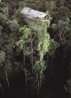 Korowai treehouse, West Papua New Guinea