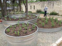 5 Ways to Use Galvanized Stock Tanks as Planters Raised Garden Beds, Raised Beds, Raised Gardens, Container Gardening, Gardening Tips, Organic Gardening, Galvanized Stock Tank, Galvanized Planters, Stock Tank Pool