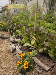 #ortiurbani #organicfood #bio #vegetable #vegetarian #organicvegetables #urbanfarming #mygarden #ortogenuino #km0
