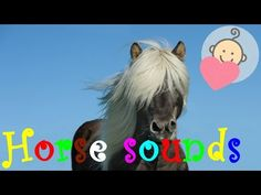 Horse sounds effect | Horse neighing, riding | Animal sounds for children to learn - YouTube