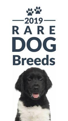 Remarkable Dog Training Tips For The Average Joe Ideas. Awesome Dog Training Tips For The Average Joe Ideas.