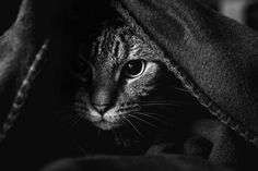 mysterious-cat-photography-black-and-white-38-57bffb3038df5__880 2