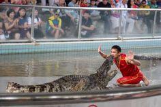 Crocodile, Crocodiles