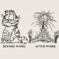 Life Lessons from Chronic Illness. A reflection as I lay undergoing treatment, of 5 things having Fibromyalgia for over a decade has taught me! Office Humor, Work Humor, Work Funnies, Job Pictures, Funny Pictures, Hilarious Photos, That's Hilarious, Funny Jobs, Funny Quotes