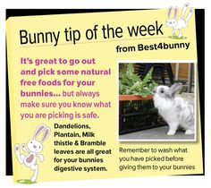 Bunny tip week 5 - Go out and pick some natural free foods...