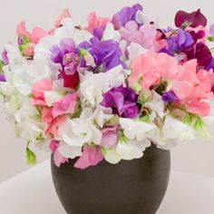 love sweet peas...they smell so, well, sweet!
