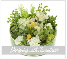 In this DVD Leanne explores the use of beautiful and versatile succulents in floral design as she demonstrates techniques for designing with succulents as both whole plants and selected cuts. Designs featured include a dramatic garden design, a formal linear design, a leaf wrap centerpiece, and many more, even a hand-tied design.