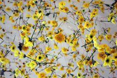Rebecca Louise Law est un artiste londonienne qui transforme les espaces avec de magnifiques installations florales.