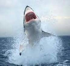 Jaws life