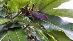 The Grasshopper | por Bruno Riggs