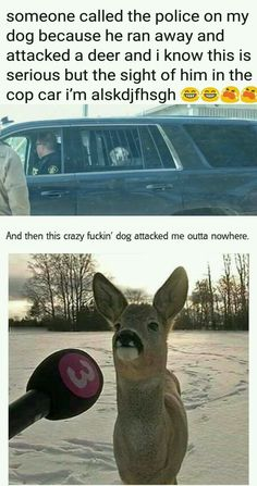 Funny animal pictures of the day. Here is the collection of top 28 latest really funny animal memes pictures that will make you LOL every time. Funny Animal Memes, Funny Animal Pictures, Funny Images, Funny Animals, Cute Animals, Lol Pictures, Funniest Animals, Cartoon Images, Funny Photos