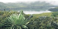 Iguaque (Boyacá). El ascenso a la laguna de Iguaque es inolvidable. Las caminatas entre bosques y páramos cubiertos de neblina hacen del san...