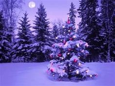 Images of winter evening scenes. Looking outside enjoying the lights and the snow.