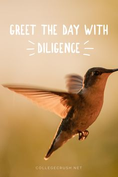 Greet the day with diligence. | diligence | goal quote | college life quote | freshman tips | success quote | leadership quote | day quote | good morning quote | affirmation | via collegecrush.net Goal Quotes, Leadership Quotes, Success Quotes, College Life Quotes, Freshman Tips, Diligence, Morning Quotes, Quote Of The Day, Affirmations