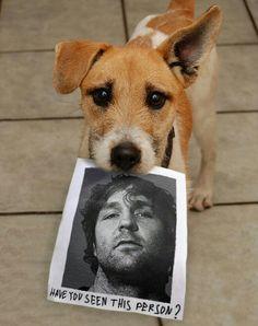 Have you seen Dean Ambrose? Dog Lovers, Dean Ambrose, Wwf, Music Hits, Dog Club, Bagans, Crazy Dog Lady, Jason Orange, Wrestling Wwe