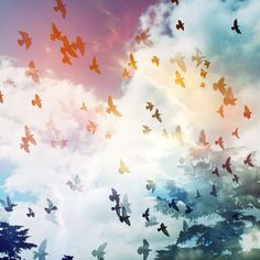 birds in colorful flight